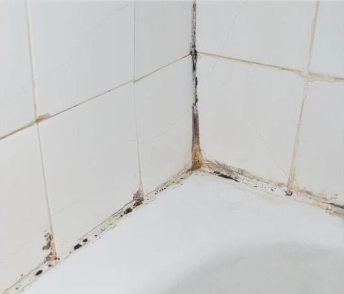 Mold Damage – Canton Bathroom