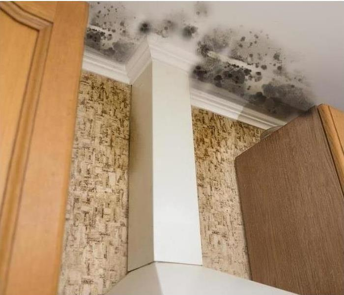Mold Remediation We Can Remediate and Prevent Mold Damage in Your Holly Springs Home